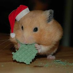 Have A Happy Hamster Holiday!  ... from PetsLady.com ... The FUN site for Animal Lovers
