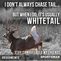 I've actually never seen a deer in the woods while I'm hunting.it's usually on the way to and from the hunting grounds that they run in front of my car.little bastards. Deer Hunting Humor, Hunting Jokes, Deer Camp, Hunting Camo, Hunting Girls, Hunting Stuff, Funny Hunting, Archery Hunting, Crossbow Hunting