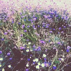 #photo #meadow #grass #flowers #village Grass, My Arts, Drawing, Instagram Posts, Flowers, Plants, Drawings, Flora, Grasses