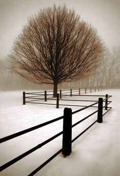 Winter Geometry, Pennsylvania photo via linda.  I have this picture in my living room.