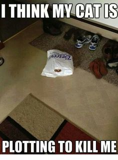 ....took me a second or 2 to find the cat!
