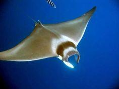 Unterwasserwelt in Kreta Griechenland