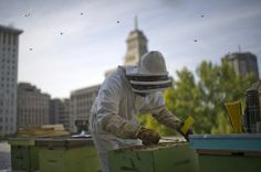 Inspired | Bees in the City