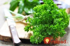 The Healthiest Types of Lettuce and Leafy Greens Oregano Plant, Sage Plant, Growing Mint, Growing Herbs, Home Remedies For Bruises, How To Propagate Lavender, Best Herbs To Grow, Water Retention Remedies, Plants Under Trees