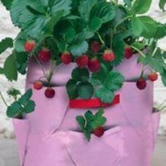 Erdbeersack 8,90€