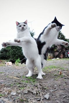 Are they playing or dancing? #cats #play