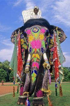 Decorated Indian Elephant   Painted elephants   Pinterest