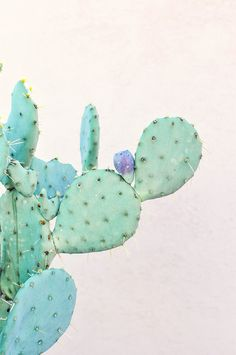 All about cacti