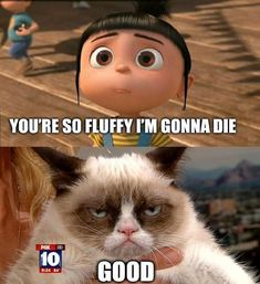 Poor Agnes. Grumpy cat tells it like it is.