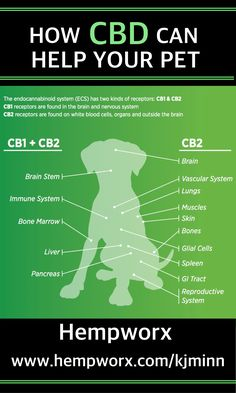 How Much Cbd Oil Should I Give My Dog Cbd Dosage Chart