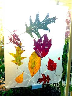 leaves + 2 sheets GLAD press-n-seal = stained glass art