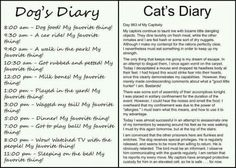 Dog's dairy versus Cat's dairy!