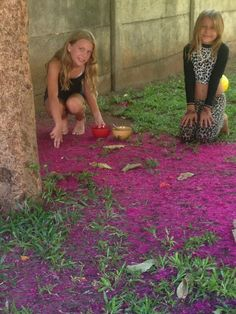 It's raining peras de agua blossoms - http://4souls1dream.blogspot.com/2017/04/its-raining-peras-de-agua-blossoms.html - Our pera de agua (water pear) tree dropped her blossoms by the thousands and carpeted the ground beneath her limbs for more then a week. Our kids, and their friends, were enamored by the intensity of the fragrance and the profusion of the vibrant pinkn…   #overland #overlanding #adventuretravel #travel
