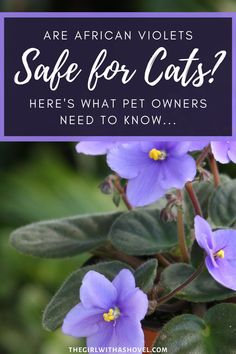Keep your little feline friend happy with this guide on how to keep your plants non-toxic and safe for your pets! Also included are tips on how to keep your cat safe even if they are commonly taste-testing your plants! Because your cat's safety is important!
