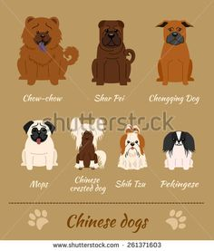 Set of Chinese dogs. Vector Illustration of seven different breeds of dogs: Chow-Chow, Shar Pei, Chonqing Dog, Mops, Chinese Crested Dog, Shih Tzu, Pekingese