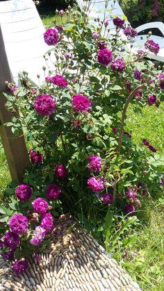 Dans mon jardin de merveilleuses couleurs