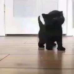 Little black kitten - Cool Cat Tree House - Animaux mignons - Cute Baby Cats, Cute Little Animals, Cute Cats And Kittens, Cute Funny Animals, Kittens Cutest, Black Kittens, Funny Cats, Fluffy Kittens, Ragdoll Kittens