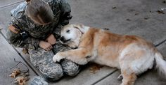 Senior Dog Can't Stand Up Anymore, But Watch When She Sees Her Soldier Back Home! | Just Mans Best Friend For Life