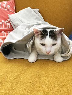 丸くなった | うちの猫がまた変なことしてる。【猫まんが】