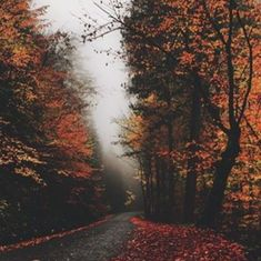 Find images and videos about nature, autumn and fall on We Heart It - the app to get lost in what you love. Between Two Worlds, Autumn Cozy, All Nature, Fall Pictures, Fall Pics, Autumn Photography, Best Seasons, Jolie Photo, Autumn Inspiration
