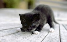 Those Amazing Cats #cats, #pets, #animals, https://facebook.com/apps/application.php?id=106186096099420