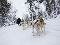 12 Incredibly cool things to do in Sweden