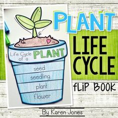 Plants {Plants Life Cycle Flip Book}: This fun little interactive craftivity allows your students to reinforce their knowledge of the life cycle of a plant.
