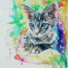 Cat colorful draw