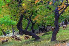 Karimabad Hunza