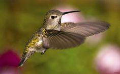 Classical hummingbird shot