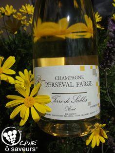 Champagne Terre de Sables belle couleur OR, de la Maison Perseval-Farge à Chamery Montagne de Reims, bulles fines #CaveOSaveurs