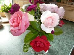 A rose arrangement in red and pink, courtesy of C Reed in Shepton Mallet
