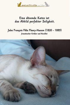 Sonntag - der perfekte Tag zum Dösen - nicht nur für Katzen 😉 #katze #sprüche #lustig #spruch Dog Cat, Cats, Animals, Sunday, Inspiring Sayings, Funny, Gatos, Animales, Animaux