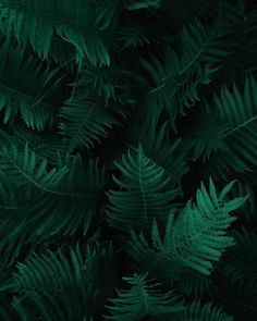 New free stock photo of botany dark green plants fern Dark Green Aesthetic, Plant Aesthetic, Nature Aesthetic, Aesthetic Photo, Aesthetic Backgrounds, Aesthetic Iphone Wallpaper, Green Backgrounds, Desktop Backgrounds, Wallpaper Verde