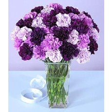 carnations - Google Search