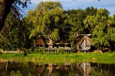 Timbavati Private Game Reserve is bordered by the Kruger National Park and the Sabi Sands - guests are likely to be treated to frequent Big Five sightings. Kruger National Park, National Parks, Game Lodge, River Lodge, Private Games, Nocturnal Animals, Before Sunrise, Game Reserve, Wild Dogs
