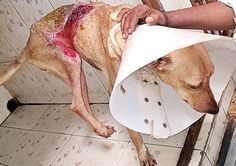 Heartless Man Pours Boiling Water On Dog Severely Injurying Her! Demand A Harsh Penalty For The Monster!   PetitionHub.org