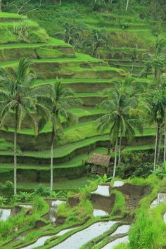 ubud... It looks just like this in person... Can't wait to go back ✨
