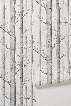 10 Excellent Sources for Buying Birch Tree Wallpaper