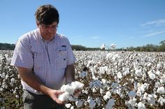 """""""It takes a lot of things going right to have a good crop,"""" he said. """"I feel like God is looking out for me during years like this. Seeing a good rain in the middle of summer and seeing a beautiful crop come in — it makes it all worth it."""" —Jay Minter, a Dallas County cotton farmer"""