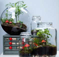 Collection of terrariums