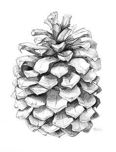 Sarah Melling pencil drawing