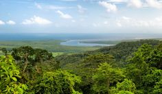 The Daintree rainforest in all her vibrancy.