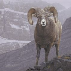 Daniel Smith Wildlife: Original Paintings