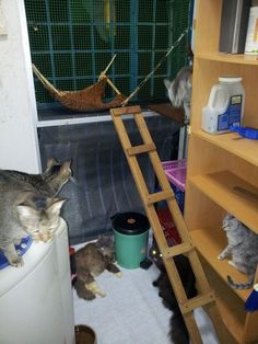 Awesome Kitty Room