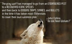 Mother Earth, Mother Nature, Wolf Population, John Collins, Beautiful Wolves, Stop Animal Cruelty, Coyotes, Nature Tree, Animal Welfare