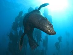 Snorkeling with Seals in South Africa | South Africa Portfolio Travel Blog