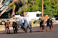 Dogs in service on pinterest military working dogs service dogs and