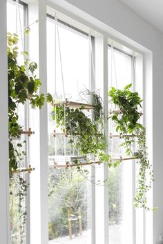 3 Beauty Indoor Garden Ideas Indoor gardening helps you control the environment surrounding your plant, and at the same time, the plant produces better air inside the house. Use these ideas for a beautiful indoor garden. House Plants Hanging, Window Plants, Hanging Flower Pots, Appartement Design, Cactus Y Suculentas, Ficus, Plant Holders, Plant Decor, Houseplants