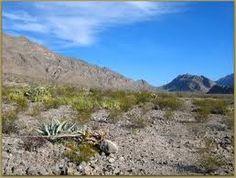 desert landscape in Coahuila, Mexico